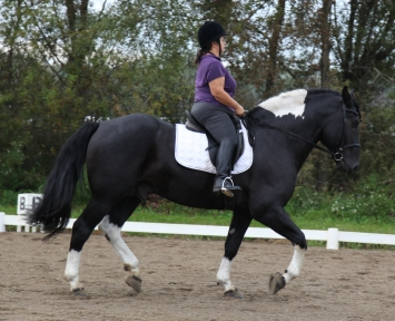 haflinger haflingers dressage ahr dorset dorsets sheep lamb lambs chickens plymouth rock rocks columbian barred silver penciled honeybees honey bees nucs german shepherds border collies michigan akc abca lesperance glaurung mi ohio oh